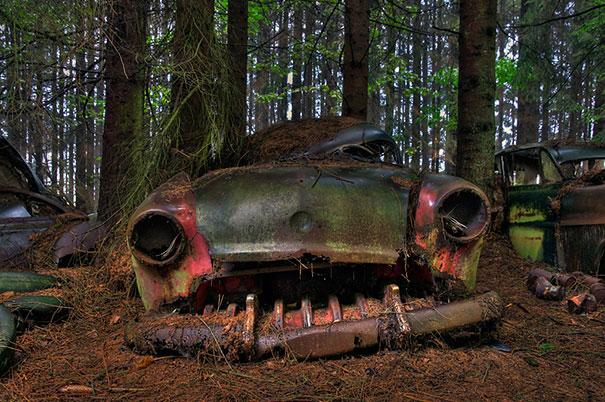比利時森林11