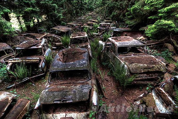 比利時森林3