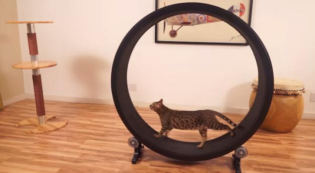 貓咪跑步機1