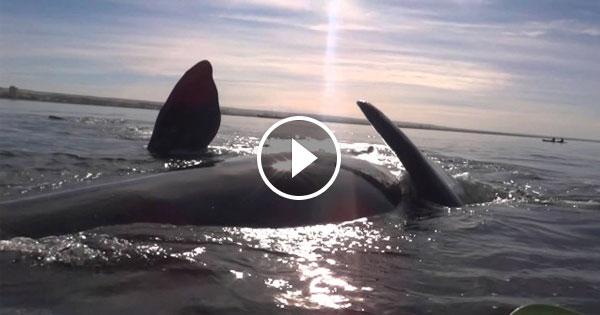 鯨魚獨木舟