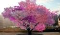 40種水果樹