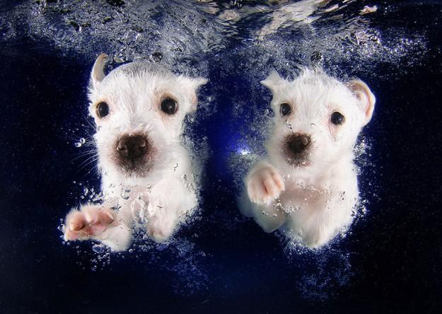 水底小狗1