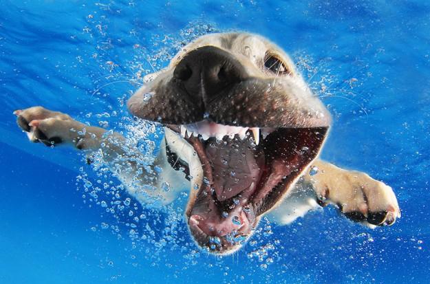 水底小狗10