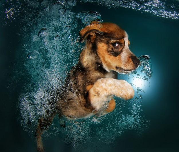 水底小狗2