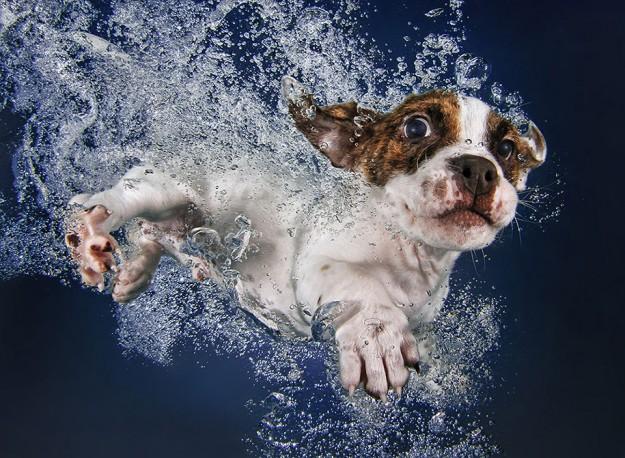 水底小狗4
