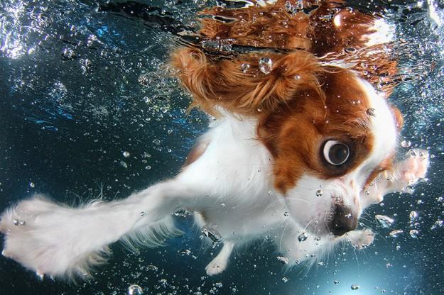 水底小狗6