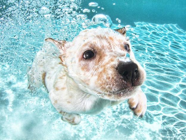 水底小狗7