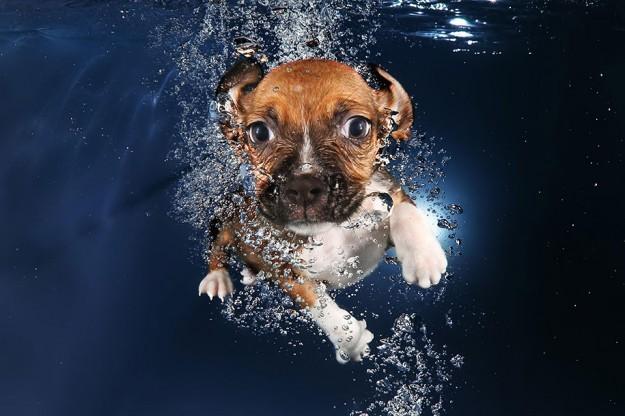 水底小狗8