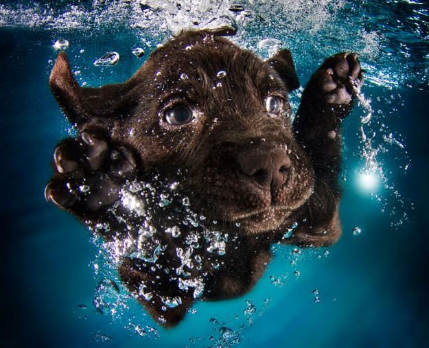 水底小狗9