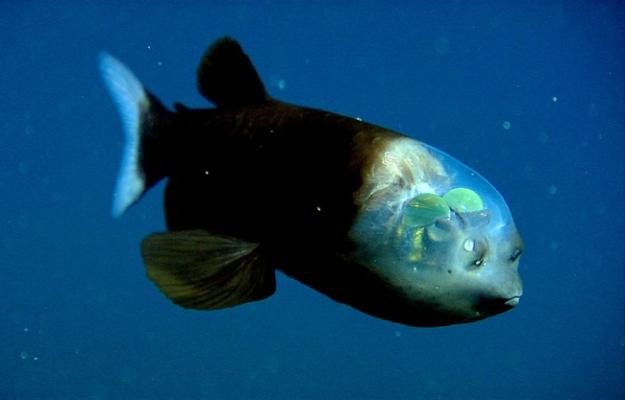 深海生物1