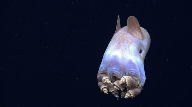 深海生物15