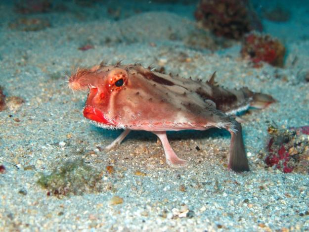 深海生物3