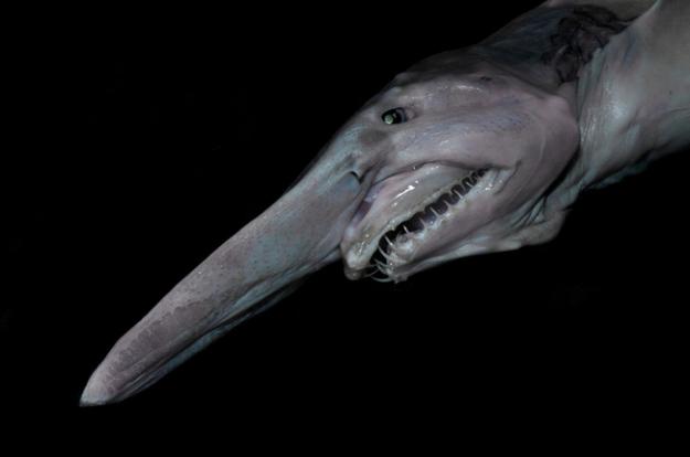 深海生物8
