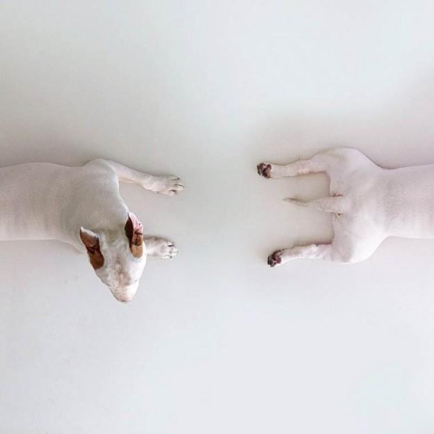 牛頭㹴16