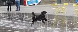 狗與噴水池
