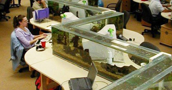 魚缸辦公室