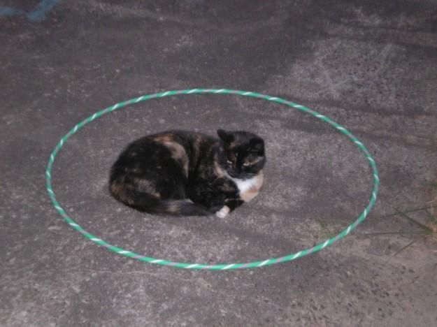 召喚貓咪3
