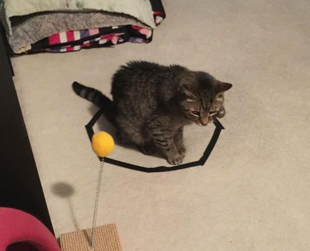 召喚貓咪5