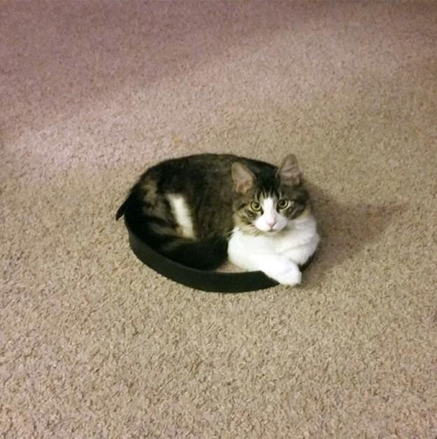 召喚貓咪6