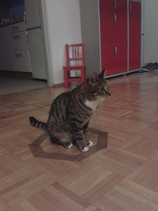 召喚貓咪9