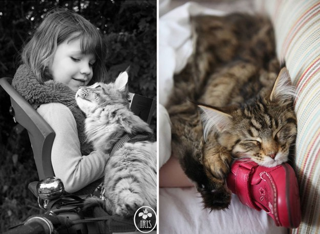 治療貓16