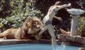 獅子當寵物