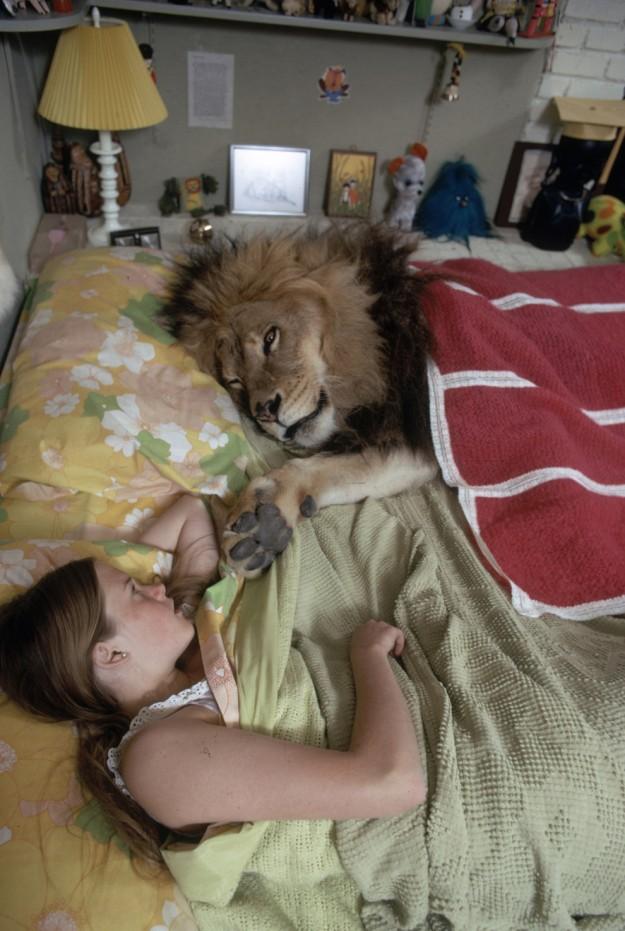 獅子當寵物11