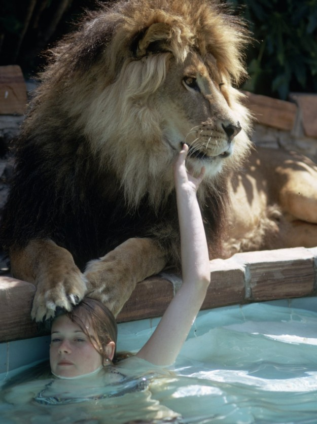 Griffith & Neil The Lion