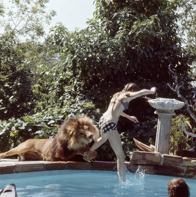 獅子當寵物4