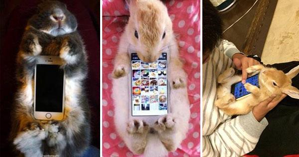 真兔手機殼