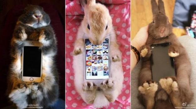 真兔手機殼1