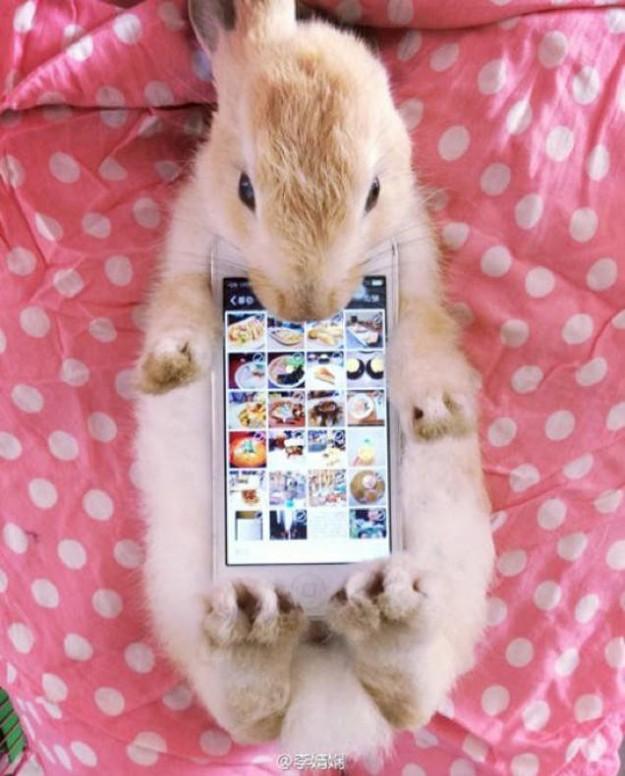 真兔手機殼10