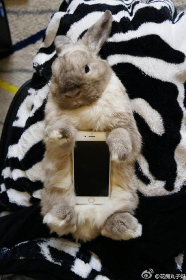 真兔手機殼11