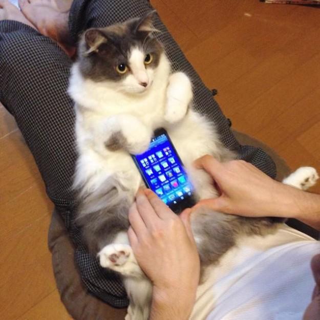 真兔手機殼12
