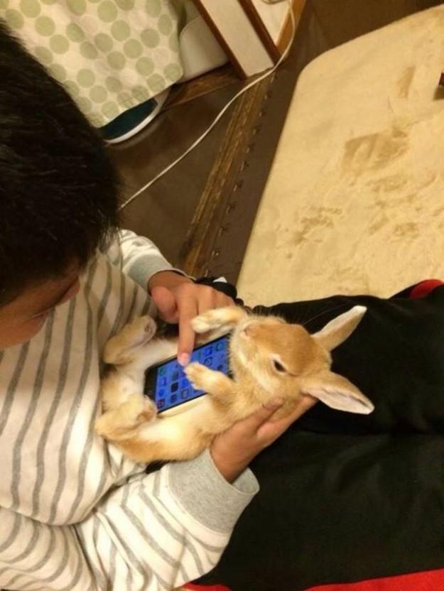 真兔手機殼2