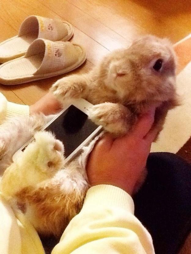 真兔手機殼3