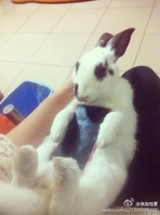 真兔手機殼4