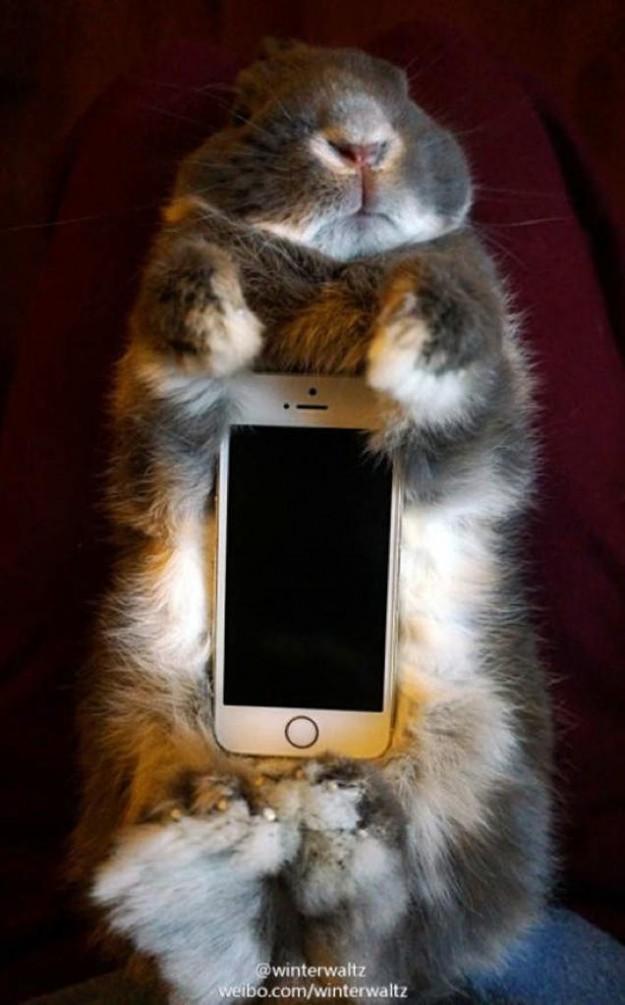 真兔手機殼5