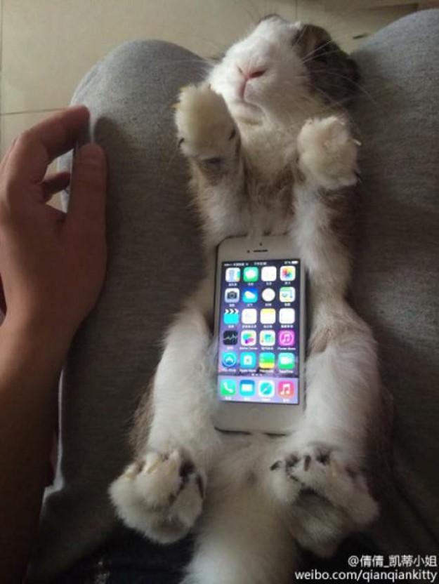 真兔手機殼6