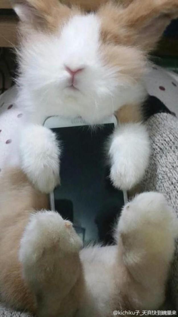 真兔手機殼7
