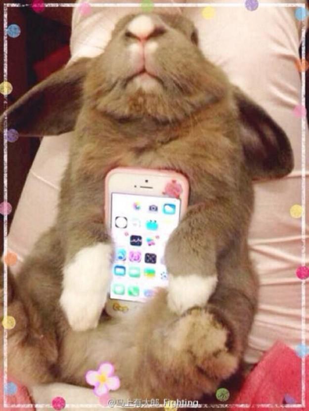 真兔手機殼8