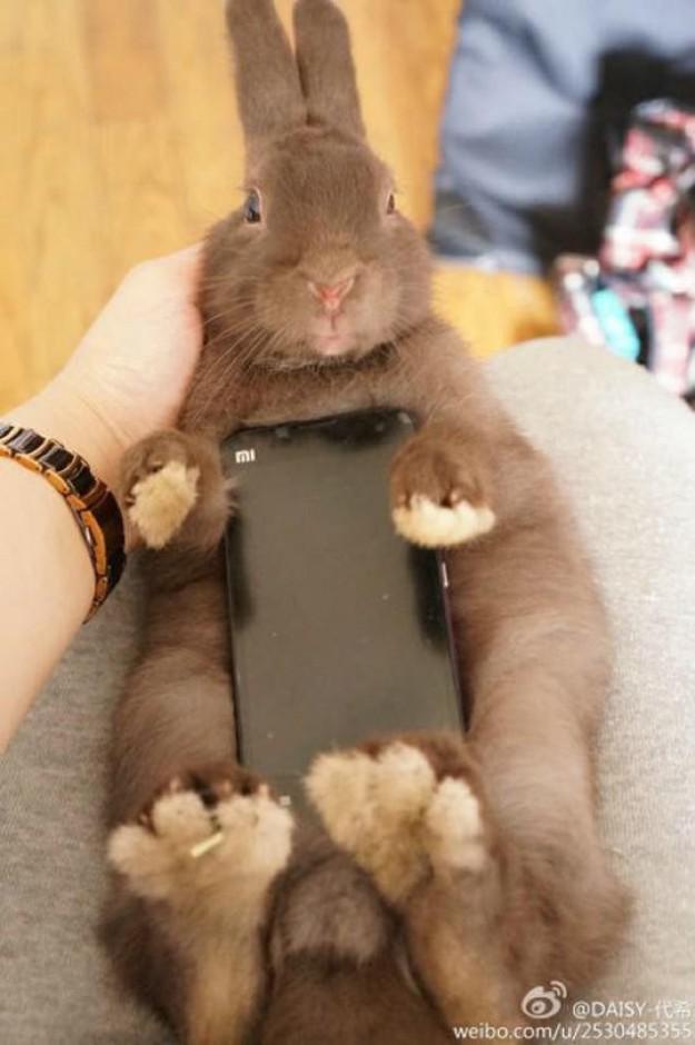 真兔手機殼9