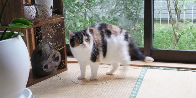 貓咪膠帶10