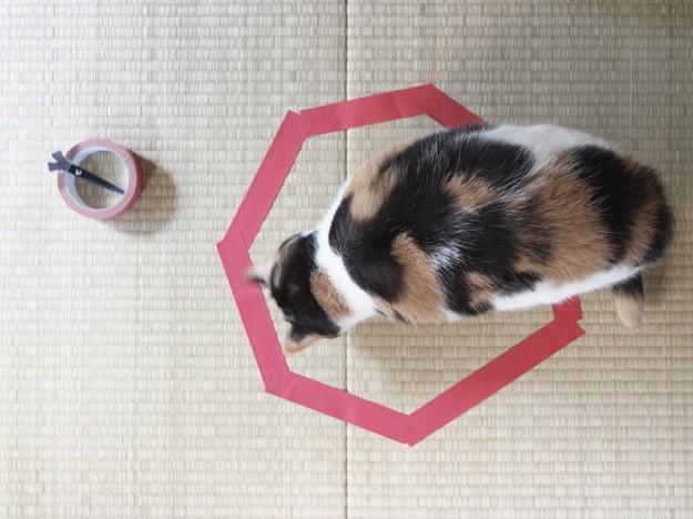 貓咪膠帶2