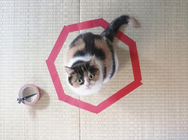 貓咪膠帶3