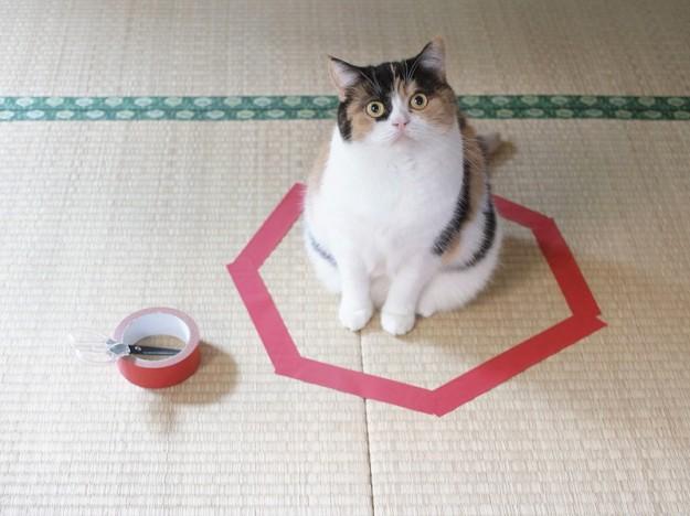 貓咪膠帶4