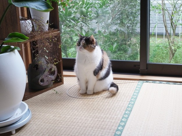 貓咪膠帶8