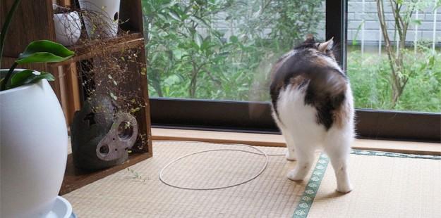 貓咪膠帶9