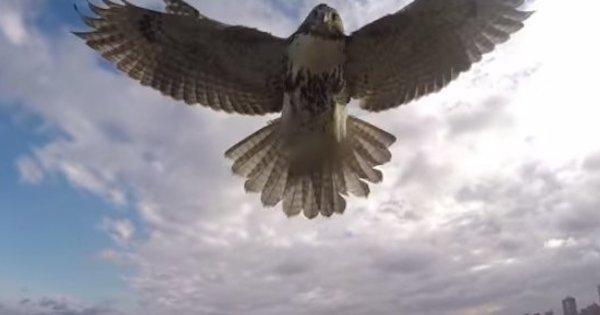 飛機vs老鷹