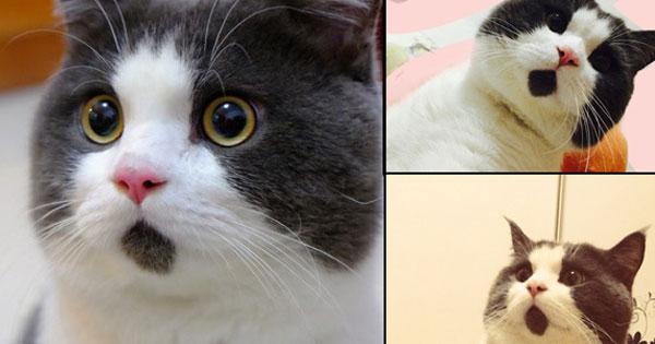 這隻貓咪的胎記長的位置不能再更完美了